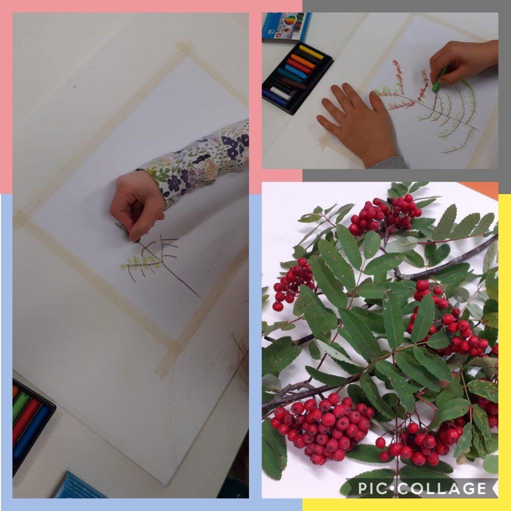 Kuvassa pihlajanmarjaoksia, joita lapset piirtävät mallista