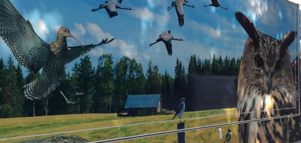 Isoja lintuja peltomaisemassa kirjastoauton kyljessä